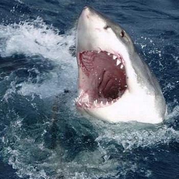 j'ai de grandes dents, mais ce n'est pas pour te croquer mon enfant.