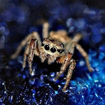 quand on y regarde bien, les araignées ne sont pas si horribles.