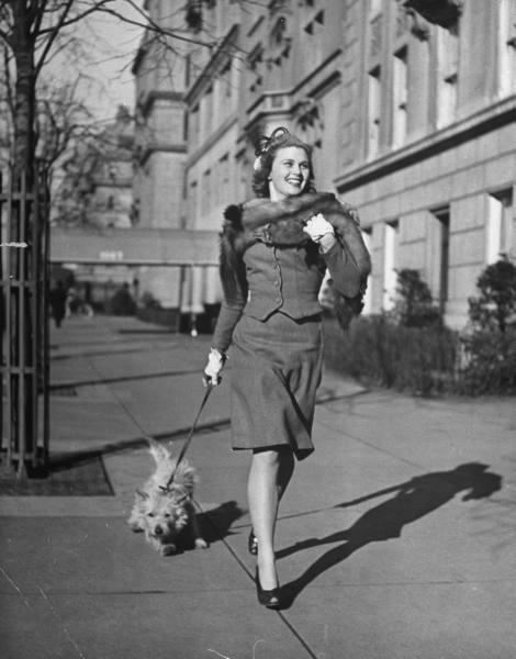 Les chiens de  New York City  par Nina Leen