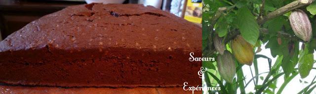 Gâteau au Chocolat Basique à Décorer
