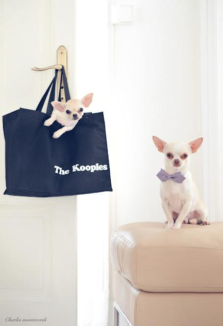 The Kooples _Florentin & Gaiea en couple depuis...