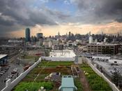 L'image quinzaine n°11 jardin toit