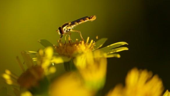 plante insecte soleil 585x329 Quoi photographier par un temps nuageux ?