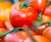 NUTRITION: Faut-il préférer le Bio? L'exemple de la tomate – Journal of Agricultural and Food Chemistry