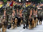 juillet chiens aussi défilent