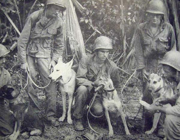 A l'occasion du 14 juillet, une sélection de Chiens dans l'armée en Images !