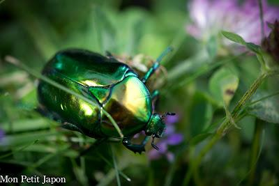 Photo du mois : la vie en vert