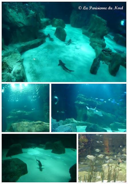 l aquarium de en nocturne paperblog