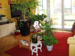 vacances 6 conseils pour vos plantes d 39 int rieur paperblog. Black Bedroom Furniture Sets. Home Design Ideas