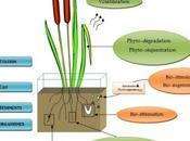 bioremédiation pour dépolluer