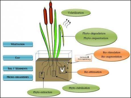 eau,pollution,micobes,bactéries,champignons,agriculture,pétrole,terre