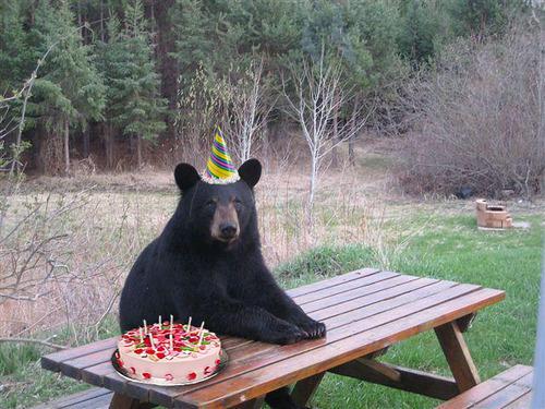 Un ours sauvé par Twitter