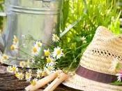 Jardinage bons conseils pour juillet