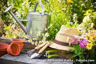 Jardinage : les bons conseils pour la fin juillet