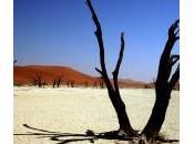 Dead Vlei l'un plus beaux deserts monde