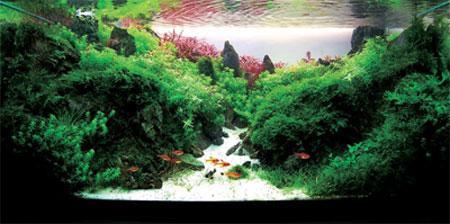 Un aquarium o le poisson devient l 39 accessoire d couvrir for Poisson aquarium pas cher