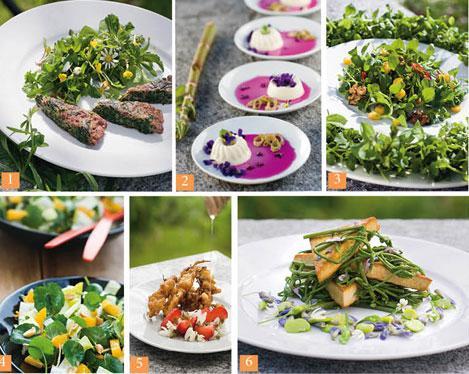 Je cuisine les plantes sauvages lire - Cuisine plantes sauvages ...