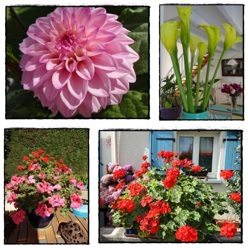 Jardin et maison fleuris, 31 juillet 2012