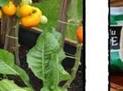 Tarte tomates cerises thym