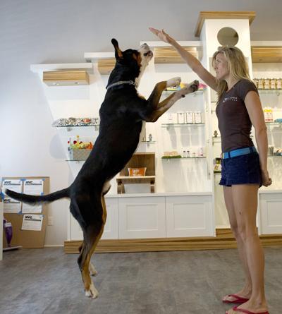 h tel de luxe pour chien rien de trop beau pour nos. Black Bedroom Furniture Sets. Home Design Ideas