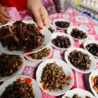 Assortiment d'insectes cuisinés