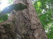 Activites ecotouristiques laeo-cameroon