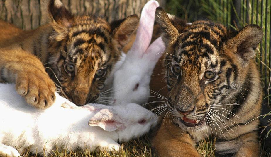 De belles images d'amitié Linsolite-amitie-animaux-L-K3BTnj