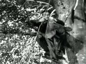 connu (1958)