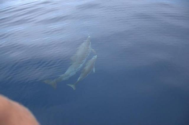 marineland antibes rencontre avec les requins