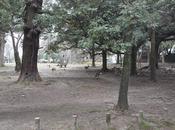 [Voyage Japon] Jour Nara