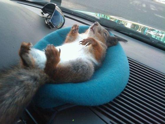 Un soldat sauve un écureuil, pour ne plus jamais le quitter