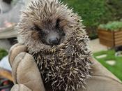 Sauvetage l'ami jardins, septembre 2012