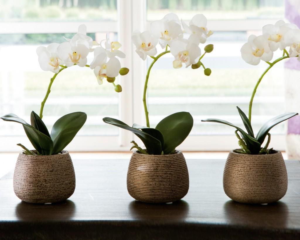 Collection automne hiver paperblog - Arrosage orchidee en pot ...