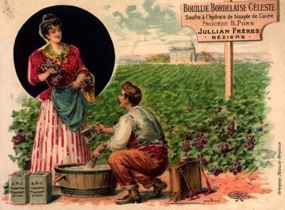 La bouillie bordelaise compatible avec un jardin colo paperblog - Traitement arbres fruitiers avec bouillie bordelaise ...