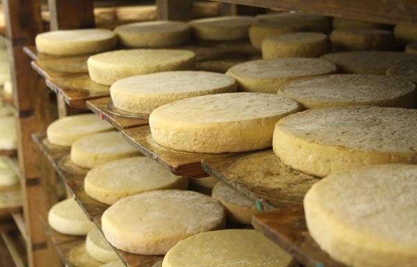 Munsters de la ferme Marchal dans les Vosges