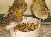 Certains aliments peuvent-ils être dangereux pour oiseaux