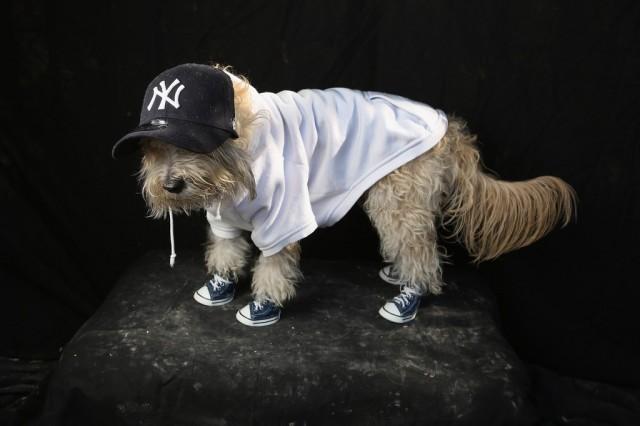 D guisements pour chien pour halloween voir - Deguisement halloween chien ...