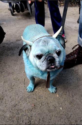 Un halloween de chien paperblog - Deguisement halloween chien ...