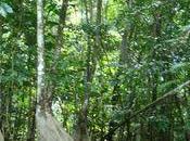 Premier week-end dans foret guyanaise région Roura