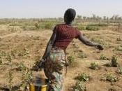 L'ONU lance portail internet pour aider l'Afrique s'adapter changement climatique