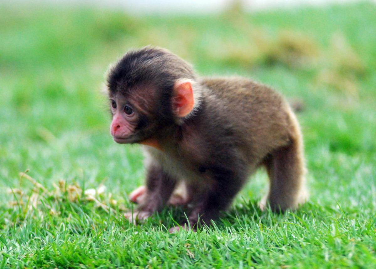 Les bébés animaux de 2012