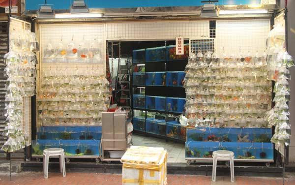 Marché aux poissons rouges Hong Kong