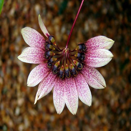 MNHN : Exposition Mille & Une Orchidées Grandes Serres Du Jardin Des Plantes, du 22 février au ...