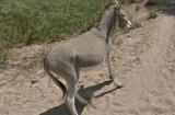 Non, Google n'est pas un tueur d'âne