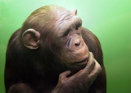 Les animaux peuvent ressentir de la jalousie, de la haine, de la frustration et peuvent même mentir!