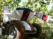 robot vigneron s'occupe vignobles