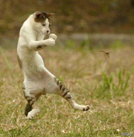 chat-fait-kung-fu-L-1