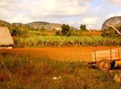 L'Ouest cubain Vinales Cayo Levisa