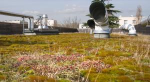 Un toiture végétalisée sur une crèche à Créteil. Photo CC Flickr CG94.