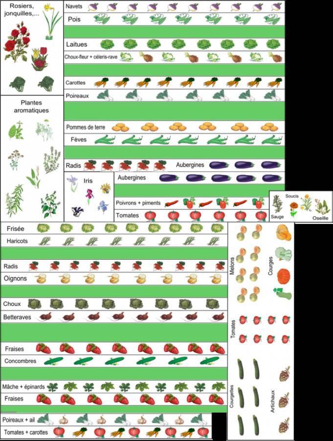 5 exemples de plans de potager et de contenus de potager - Comment congeler des haricots verts frais du jardin ...